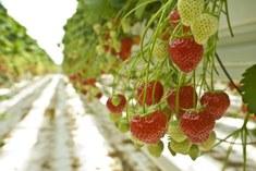 BIO4SAFE fruit