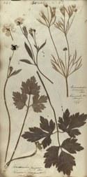 Herbarium (vergrote weergave)