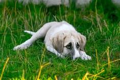 Help honden hun angst overwinnen