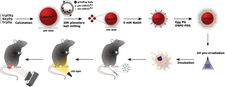 Schematic overview showing the sequential steps of solid state synthesis of LGO:Cr3+ nanoparticles, surface functionalization with a biocompatible lipid coating, loading of dendritic cells with (preirradiated) LGO‐Lip nanoparticles and in vivo imaging of dendritic cell migration toward the popliteal lymph node in mice. From Harizaj, A., De Clercq, O. Q., Descamps, B., Vanhove, C., De Smedt, S. C., Poelman, D., Lentacker, I., Braeckmans, K., Biocompatible Lipid‐Coated Persistent Luminescent Nanoparticles for In Vivo Imaging of Dendritic Cell Migration. Part. Part. Syst. Charact. 2019, 36, 1900371.