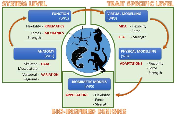 FWO project scheme 'Evolution prehensile tail in vertebrates'