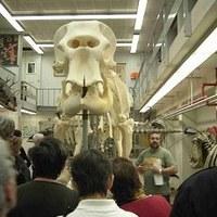 museum-dierkunde