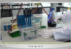 practica Biochemie en Biotechnologie