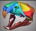 3D-schedel rat
