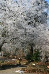 Arboretum winterzicht