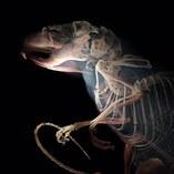 3D rendering van een hoge-resolutie CT scan van een houtmuis