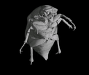 Exterior of a Beetle
