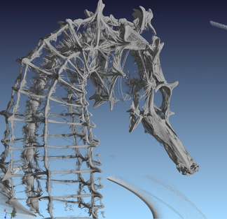 Inside structure of a seahorse
